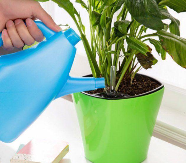 Перекись водорода для домашних растений.