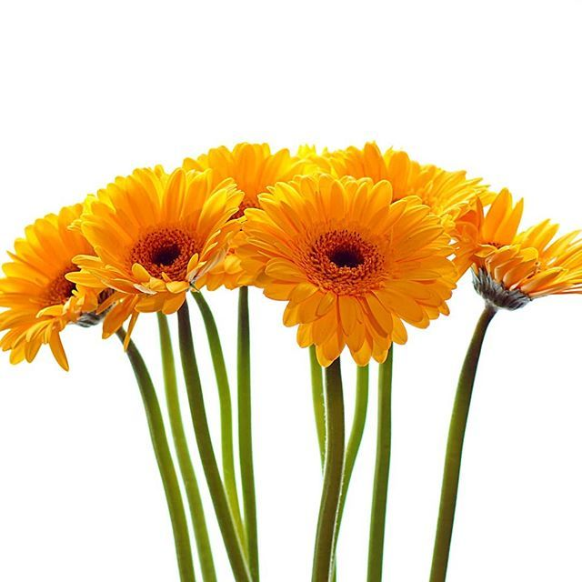 Flowers  #photographer #photooftheday #fotografia #fotografie #photography