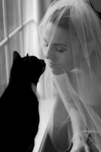 omg. my cat would totally be in my wedding... especially if it looked like it had a tux on. and if i had one...