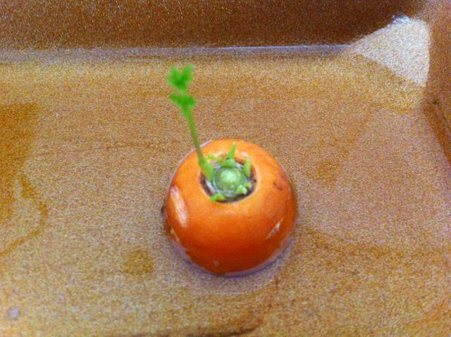 un lavoretto della natura!  Indovina che succede con la carote dopo che l'ha mangiata! #L'attivita' #per #bambini