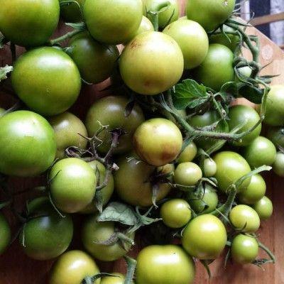 tomat  https://land.se/sa-forvandlades-en-skiva-tomat-till-21-plantor/