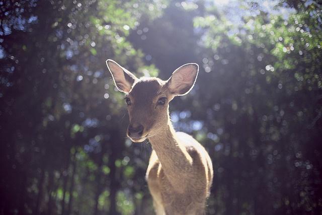 © Erik Leung #deer #japan