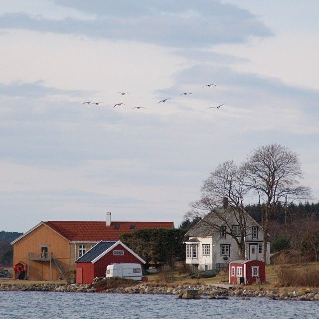 Vårstemning i Fræna. #romsdal #bestofnorway #nature #nature_featuring #møreogromsdal #fjords #norge #norway #rbnett #rsa_nature #rsa_water #amazing_shots #selgnorge #nhoreiseliv #bestofscandinavia #bestofnorway #beautiful_earth_pics #birds #spring #Padgram