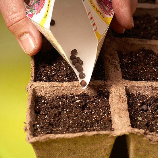 The best garden tips from Better Homes and Gardens./