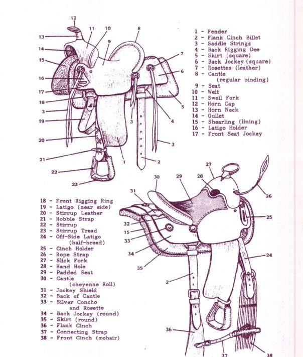 Parts Of A Saddle Saddle Parts Horses Show Horses