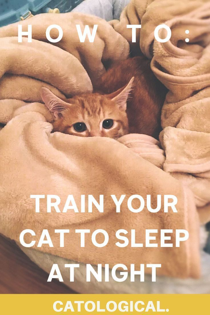 Are Cats Nocturnal How To Get Your Cat To Sleep At Night In 2020 Cat Quotes Funny Cat Love Quotes Kitten Care