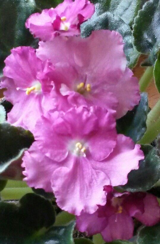 sister flowers maya angelou essay