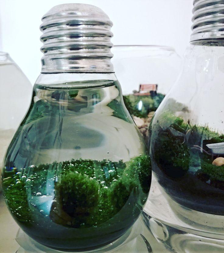 #marimo #bulb #hobby #DIY #miniworld #akvárium