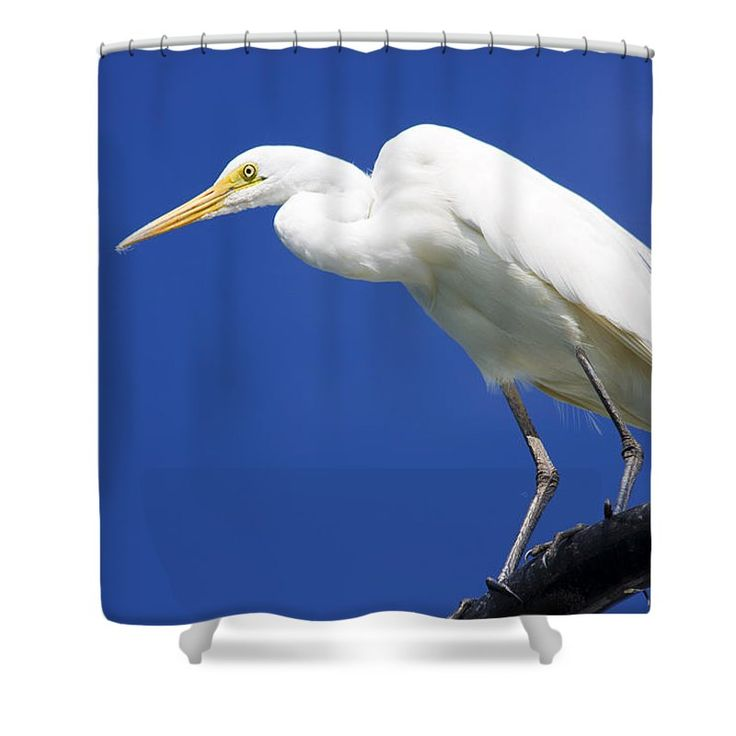 Wildlife Shower Curtain featuring the photograph Great Egret by Jorgo Photography - Wall Art Gallery