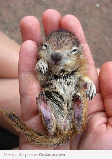 This is the cutest thing I have ever seen! Baby squirrel
