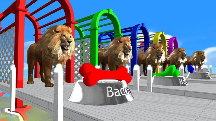 Learn Colors with Lion Eat Bacon Bone  , Learn Animals Rhymes for kids