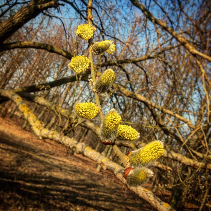 🌞🌼🌲#spring #sun #sunlight #sunset #blue #yellow #flowers #tree #garden #parc #wounderfull #mood 😻