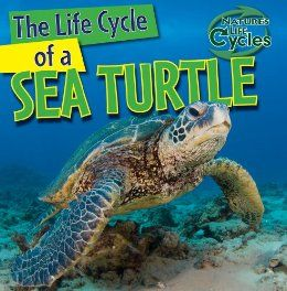 The Life Cycle of a Sea Turtle (Nature's Life Cycles): Anna Kingston: 9781433946882: Amazon.com: Books