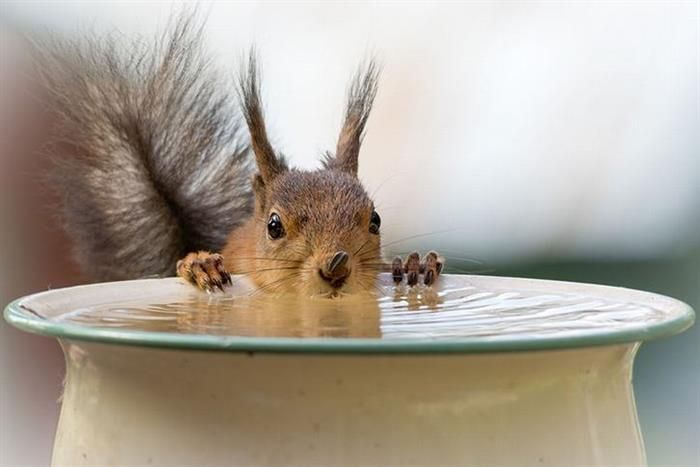 An Intimate Window into the World of Squirrels