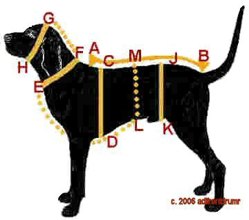 How to Measure Your Dog for a Perfect Fit - Anybody have one of these charts for cats?