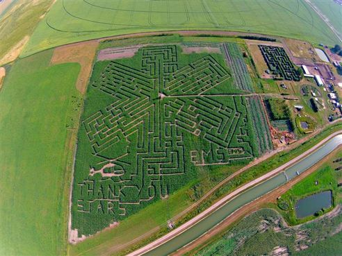 Get Lost at the Lethbridge Cornmaze. There is a Kids maze, a Trivia maze and a Big maze. Navigating through the 3 different mazes will take from 20 minutes to 2 hours. #chooselethbridge