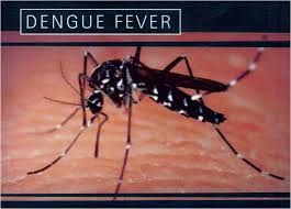 Dengue Fever Prevention and Treatment Contact us to learn more about Homeoprophylaxis – homeopathic immunizations for the prevention of Dengue Fever.  Learn about Dengue Fever, the use of homeopathy to prevent it and treat it! What Is Dengue Fever? Dengue fever is a mosquito-borne tropical disease caused by the dengue virus. Symptoms typically begin three … Continue reading Dengue Fever Prevention and Treatment →