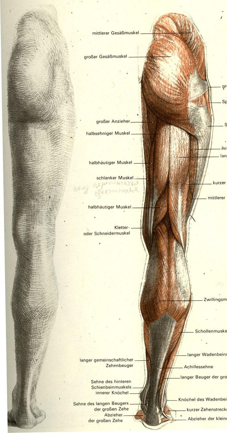Erfreut Kenny Easterday Anatomie Fotos - Menschliche Anatomie Bilder ...
