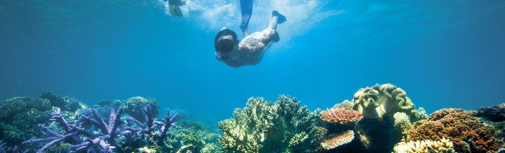 Great Barrier Reef(our honey moon) wow this is gona be priceeee....but soooooo worth it :)