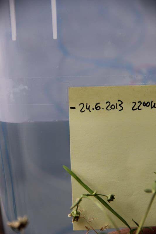Bewässerungssystem für den Urlaub selber bauen