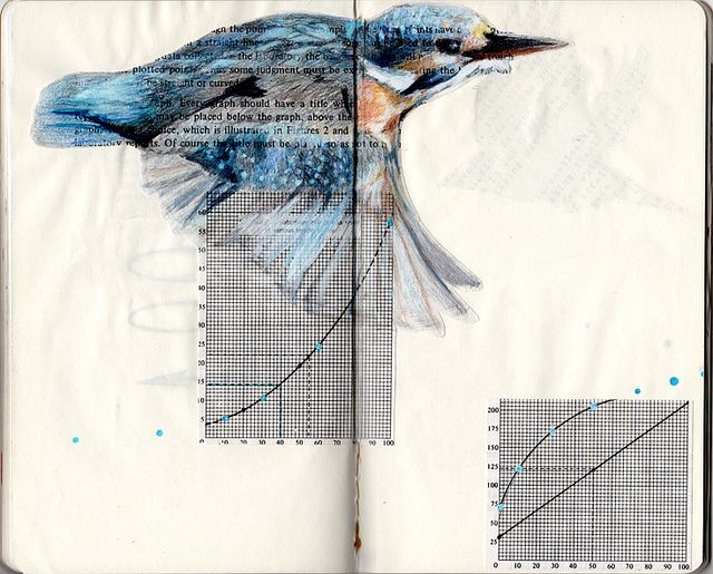 bird sketchbook for the 2011 Sketchbook Project
