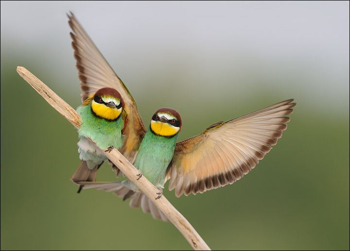 Let me protect you Sweety!: Cute Birds, Birds Pictures, Little Birds, Birds Of Paradis, Birds Photography, Wings, Funny Animal, Colors Birds, Beautiful Birds