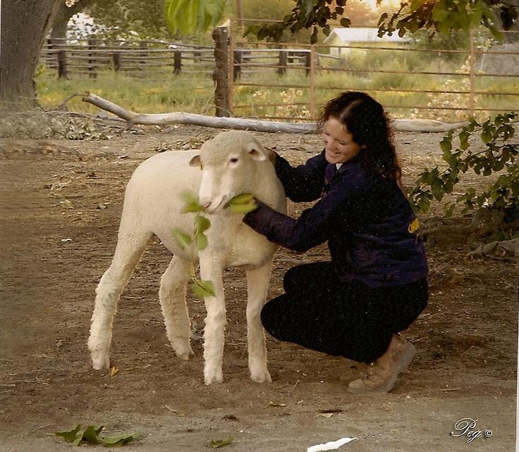 senior girl pose with sheep
