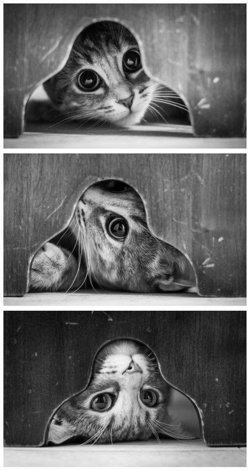 Tem dias que me sinto como este gatinho...testando todos os ângulos pra ver se me entendo melhor...!!!