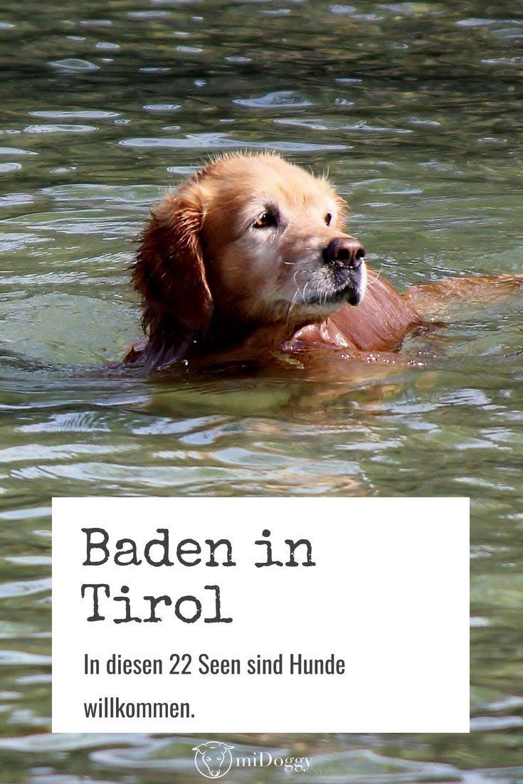 Baden Mit Hund In Tirol Bei Diesen 22 Seen Sind Hunde Willkommen