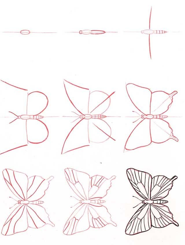 how to draw a beautiful butterfly step by step