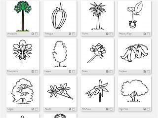 Dibujos de la flora chilena, color y para colorear