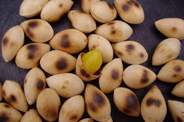 Manfaat Gingko Nuts