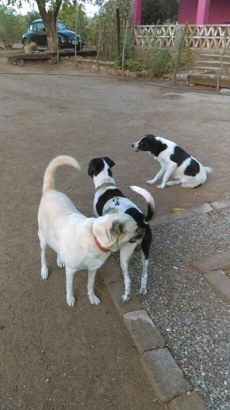 Mascotas, Ixtepec , Oaxaca, Mexico