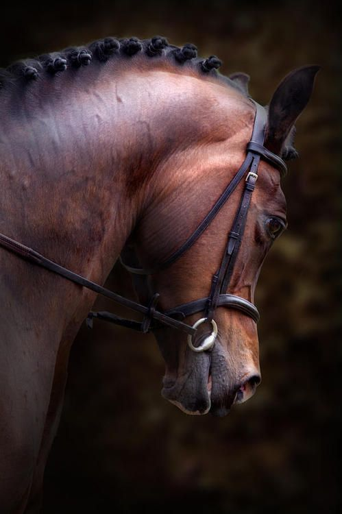 #Horse Una estupenda imagen de un caballo hermoso. An amazing image of this…