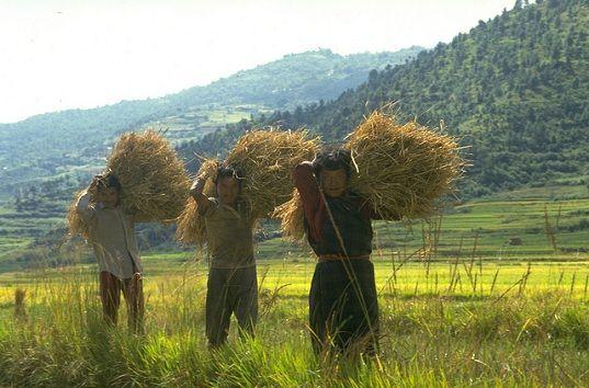 «L'agriculture biologique peut nourrir le monde»