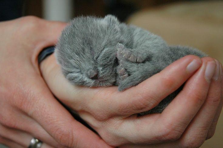 Te explicamos cómo cuidar gatos recién nacidos. Si están huérfanos no es tarea fácil pero también enseñamos a cuidar gatitos sin madre