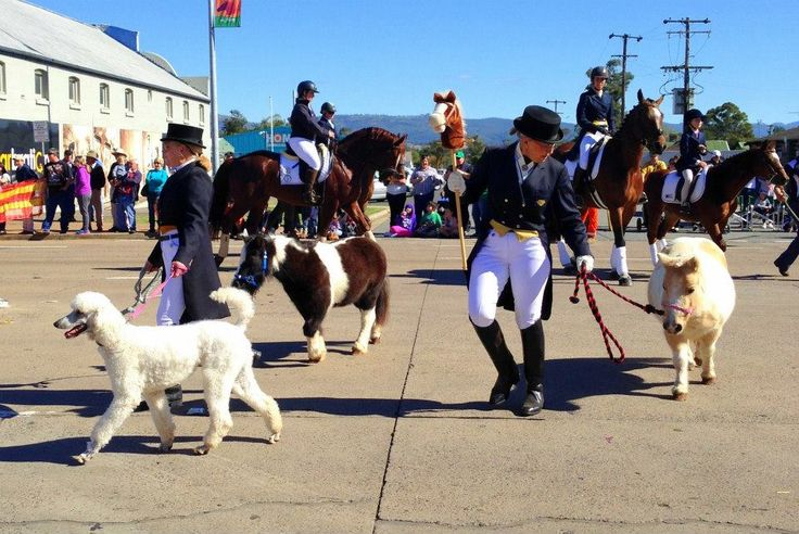 Show ponies and dogs at the 2015 Scone Horse Festival