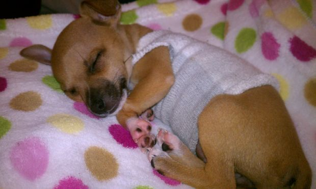 60 Best Images About Free Dog Pajama Patterns On Pinterest