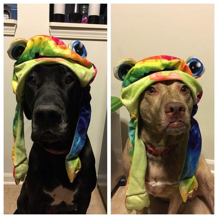 Silly Hats 91: Feeling Froggy! #Cutedogs #boopthesnoot #cuddle #fluffy #animals #aww #socute #puppy #bestfriend #aww #cute #dogs #dogsofpinterest #pets #bestfriend #boopthesnoot #itssofluffy