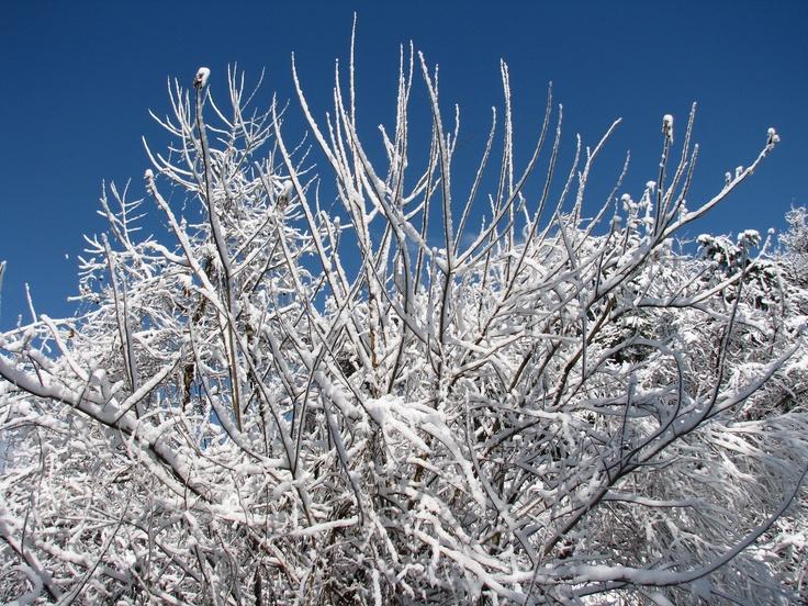 winterWinter, Photography