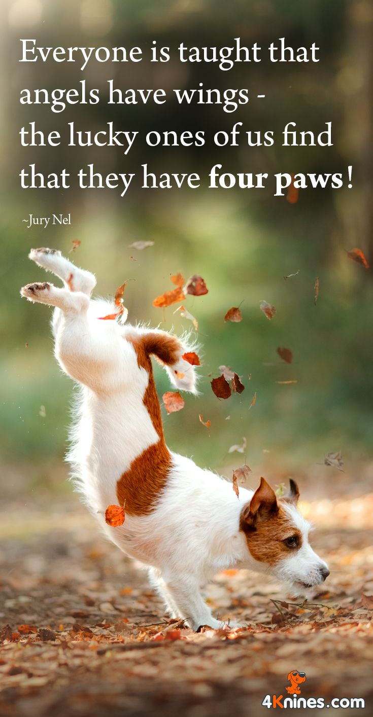 Everyone is taught that angels have wings - the lucky ones of us find that they have four paws! #love #animals
