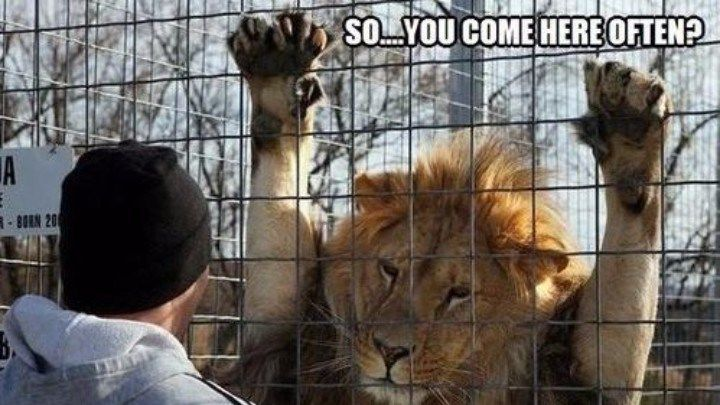 25 #Lion #Memes That Will Make You Feel Like a King http://ibeebz.com