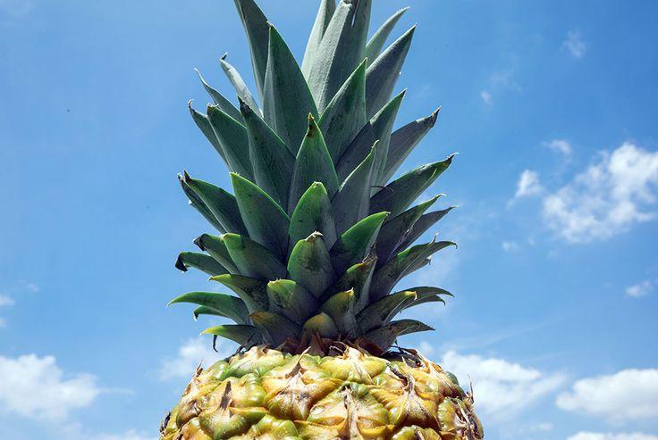 Venez retrouver le soleil au brunch de Lou Creative Food dimanche prochain ! :-)   Ananas et saumon gravlax maison seront (notamment) à l'honneur.  Toutes les infos sur la page d'accueil de www.loucreativefood.fr  Pensez à réserver !