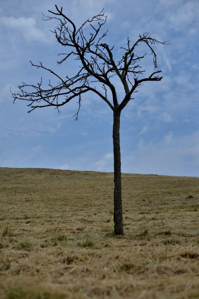 Eenzame boom | Sjoen Limburg