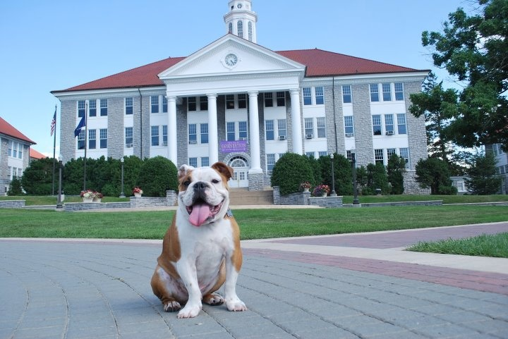 Alumni 39 s pet bull dog franklin beans in front of wilson for James madison pets