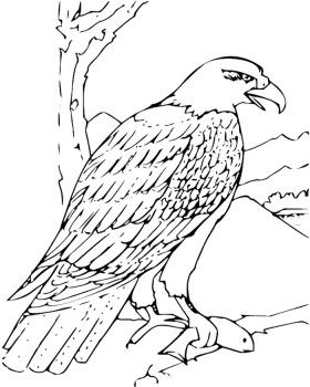 Marvelous Eagle Coloring Book 99 Big Eagle Coloring Pages