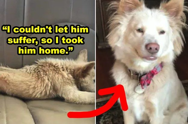 27 Before And After Rescue Dog Pics That Ll Make You Feel So Good Inside Rescue Dogs Dog Rescue Stories Dog Pictures
