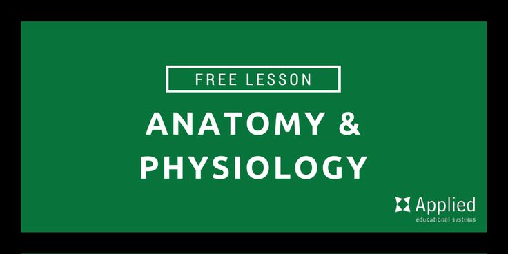 Anatomy and physiology lesson plans for high school