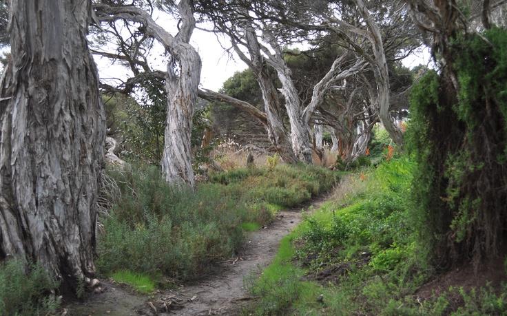 Fleurieu peninsula bushland.SA