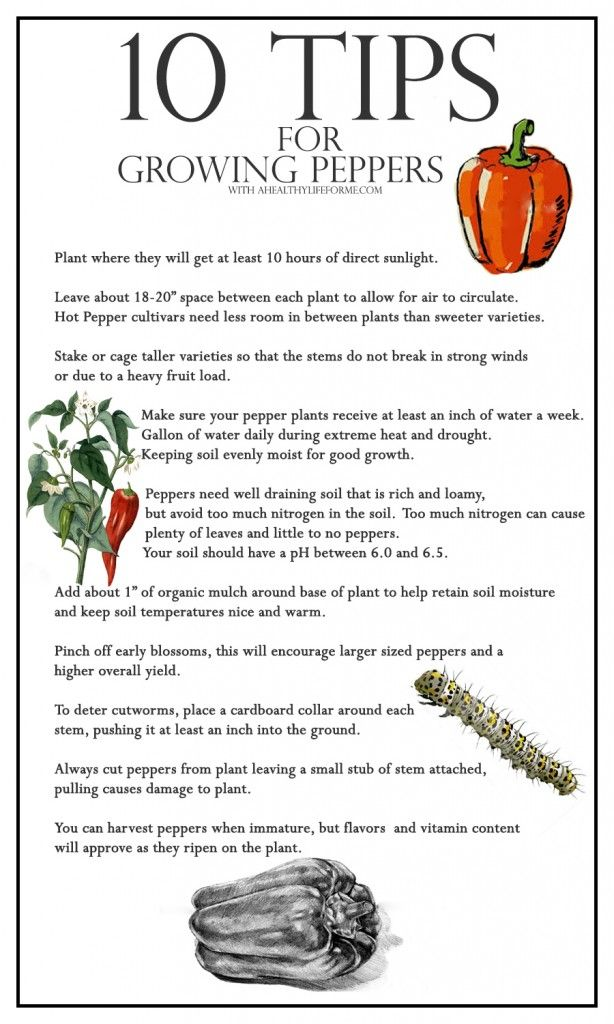 10 Tips for Growing Peppers - A Healthy Life For Me ahealthylifeforme.com